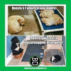 #gatti VS #cani Segui BD su YT! #bastardidentro www.bastardidentro.it