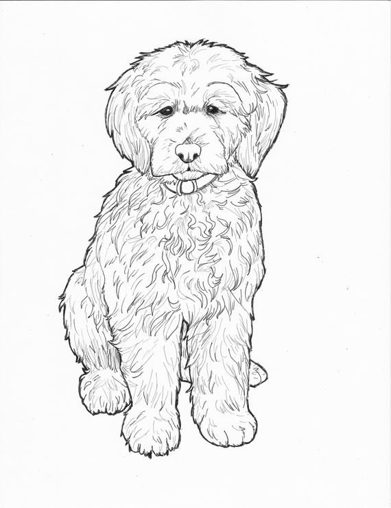 Printable Doodle Dog Coloring Page Labradoodle Art Sheet