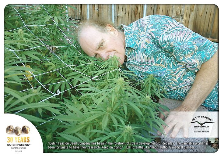 Weed World - Weed World latest cannabis news - 30 Years Of Dutch Passion