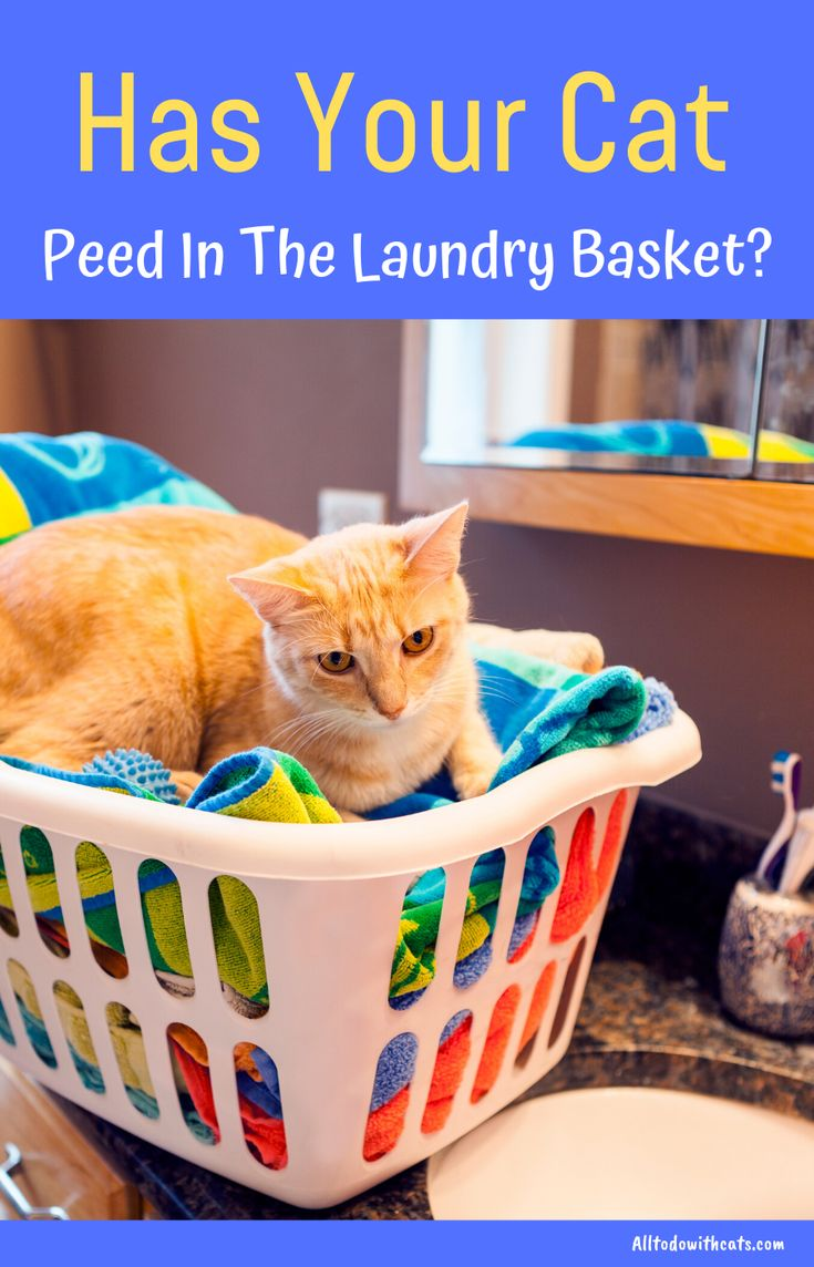 How to get rid of cat urine smell for a fresher home cat