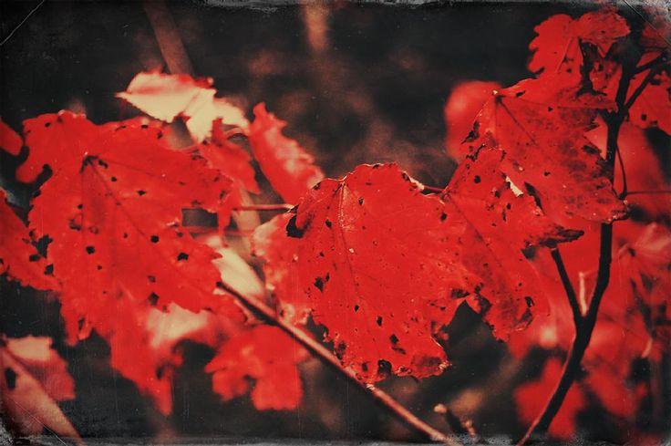 Redness by Adida Fallen Angel