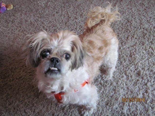 Adoptable Dogs Denver Colorado