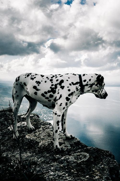 I've always wanted a dalmatian. ❤️