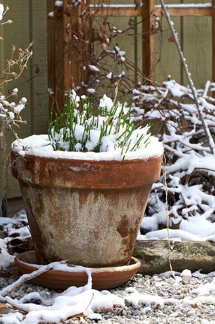 Verkoopstyling tip 5: De winter komt eraan! Zorg ervoor dat je tuin er in de herfst en winter ook mooi uitziet. Zet bijvoorbeeld wat potten in de tuin met mooie winterbloeiers.