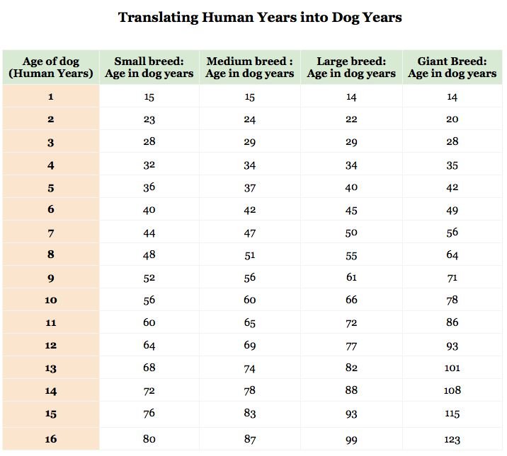 "A Helpful Guide To Figure Out Your Dog's True Age - an interesting read about the concept of ""dog years"""