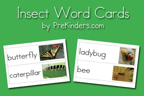 """FREEBIE download: Insect Picture Word Cards  Click on green links at end of post """"pocket chart size, small size, blank cards"""""""