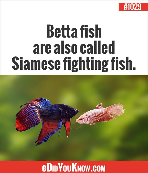 627 best images about animals on pinterest mammals for Fun fish facts