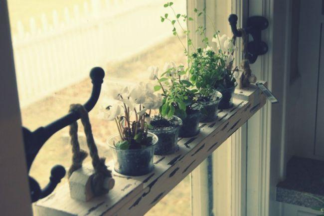 Diy 20 Ideas Of Window Herb Garden For Your Kitchen Kitchen Window Shelves Window Plants Window She In 2020 Window Herb Garden Kitchen Window Shelves Window Plants