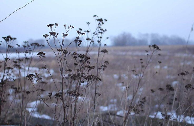 #explorer #nature #winter #focus #canon #60d #rcmovant