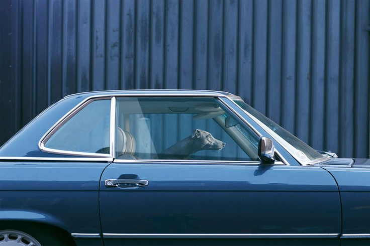 5 | A Poignant Photo Series Captures The Silence Of Dogs In Cars | Co.Create: Creativity \ Culture \ Commerce