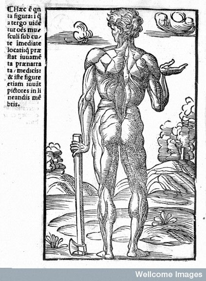 Standing male ecorche with axe - Berengarius 1521