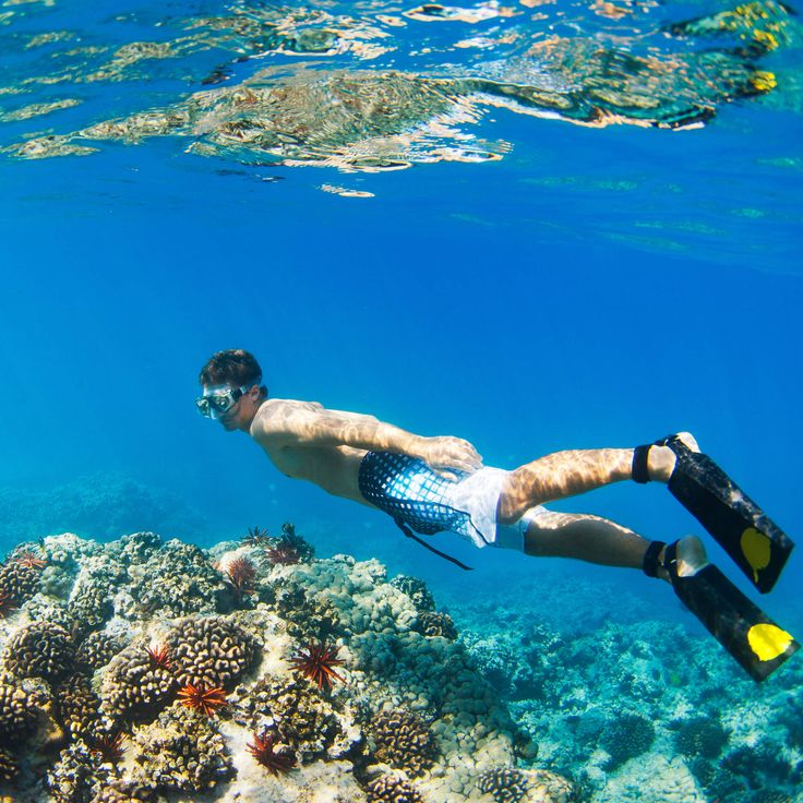The best spots for snorkeling in Oahu-One of the biggest perks of living in Hawaii is that the ocean's surface water temperature is typically 77-83°F, which lends itself perfectly to snorkeling explorations any time of year. Your best bets in Oahu are to venture outside of Honolulu, as these snorkeling sites tend to have more sea life hanging around, and are less crazy-busy on the beach.