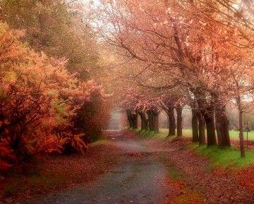 Autumn in Quebec.