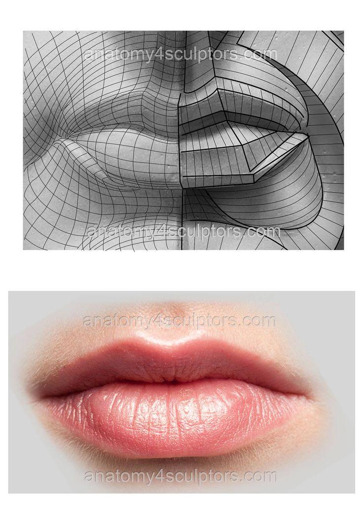 Human Lips Anatomy Gallery