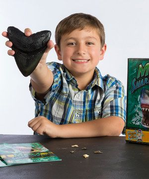 Look what I found on #zulily! Mega Shark Teeth Kit by Discover with Dr. Cool #zulilyfinds