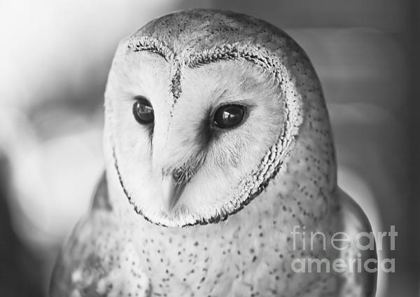 'Stylish' by Paulo Perestrelo © 2012 - #Fine Art & #Wildlife #Photography