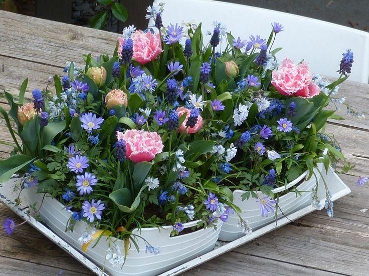 Tuinieren met Bakker » Alles over de Tuin en TuinierenEen dankbaar boeket bolbloemen - Cindy Wetter | Tuinieren met Bakker