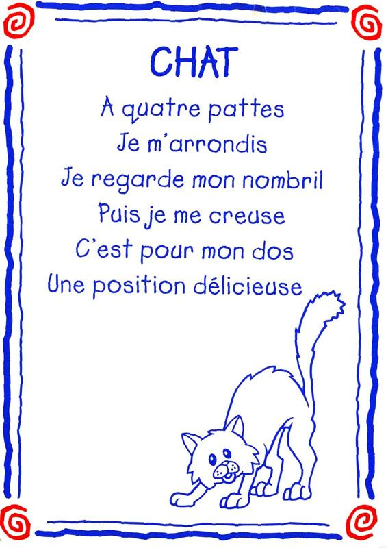 chat conseil