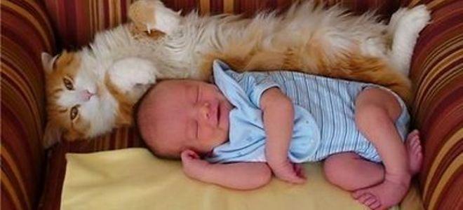 H παρέα του Επταπυργίου : Οι γάτες και οι κατσαρίδες κάνουν καλό στα μωρά: Τ...