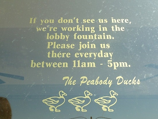 Oh The Peabody Hotel - Memphis TN I want to go see these duckies now and say here!