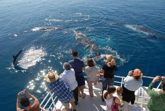 Whale watching#Hervey Bay, #Australia http://www.tripadvisor.com.au/ShowForum-g255067-i460-Queensland.html