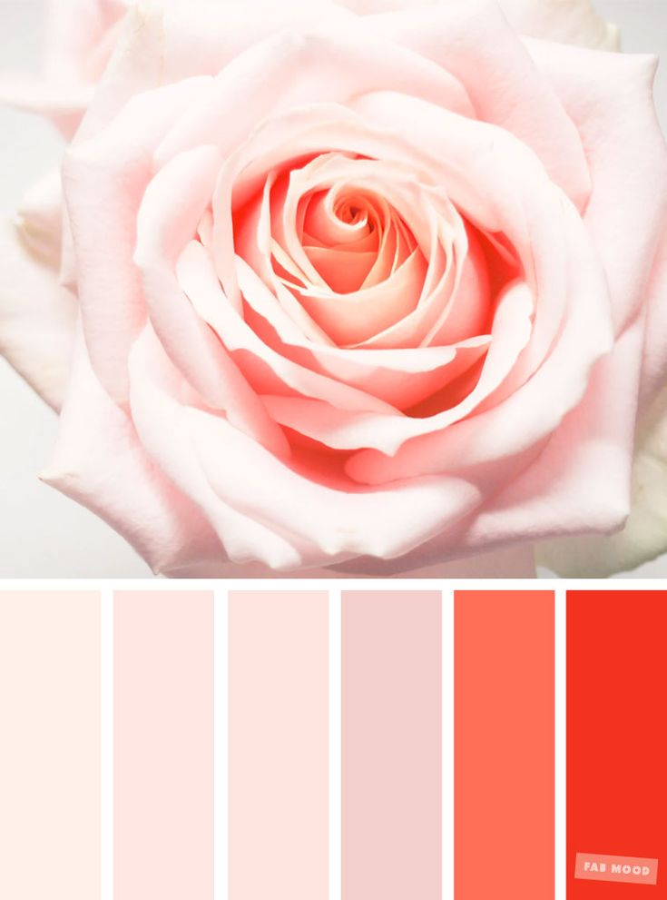 Blush tones : Pretty blush color scheme ,blush color combinations #blush #color #colorcombo