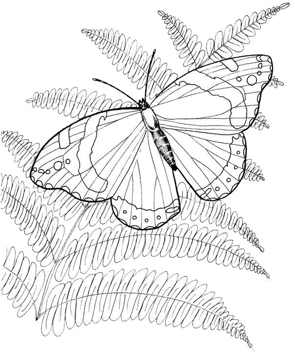 Top 136 ideas about Butterfly embroidery patterns on ...
