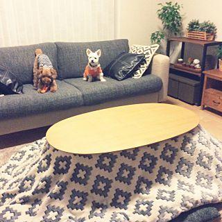無印こたつ布団のインテリア実例   RoomClip (ルームクリップ) 無印こたつ布団 · Overview/観葉植物/ナチュラル/IKEA/トイプードル/雑貨/DIY/
