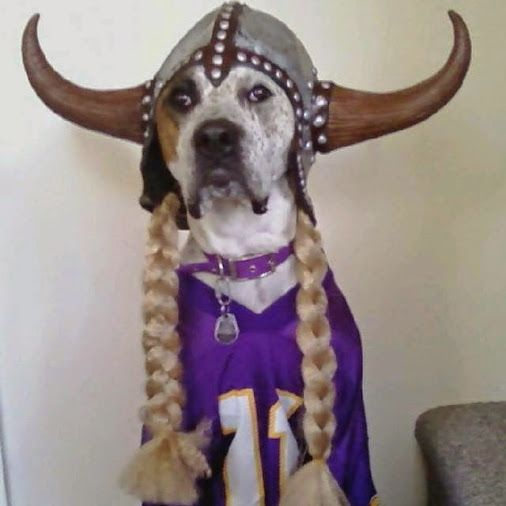 12 Best Minnesota Vikings Tailgaters Images On Pinterest