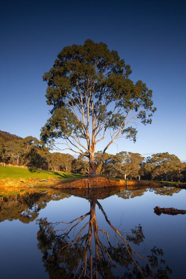 Peaceful rural scene in South Australia