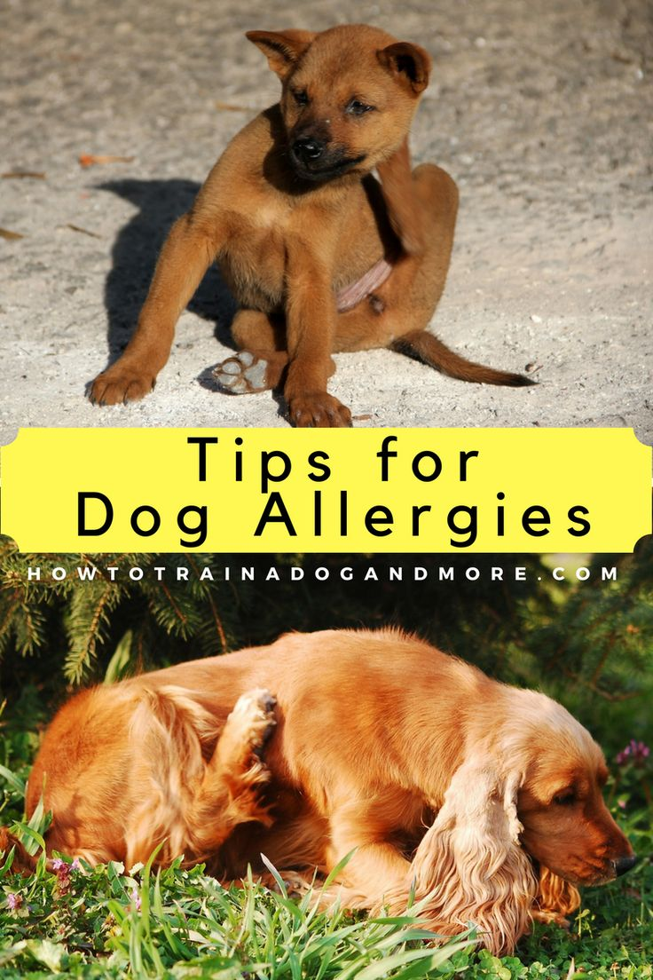 What to do if your dog has food or environmental allergies...visit this blog for lots of dog training tips, including barking, biting, aggression, toilet training, jumping, pulling, separation anxiety and more!