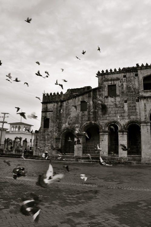 Palomas al aire en La Zona Colonial de Santo Domingo, Republica Dominicana. Sigueme en Twitter:@johnnymatosrd