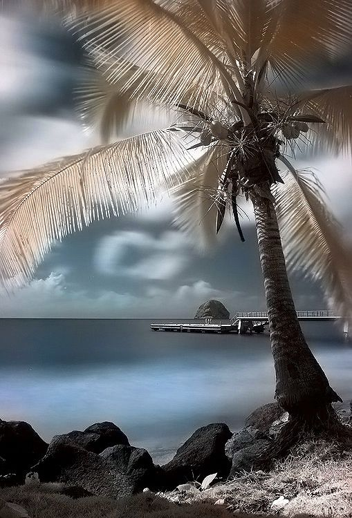 Great Palm Tree shot! ♥ ♥ www.paintingyouwithwords.com
