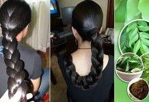 S pomocou lístkov kari a tejto jednoduchej metódy vám budú vlasy rásť rýchlejšie