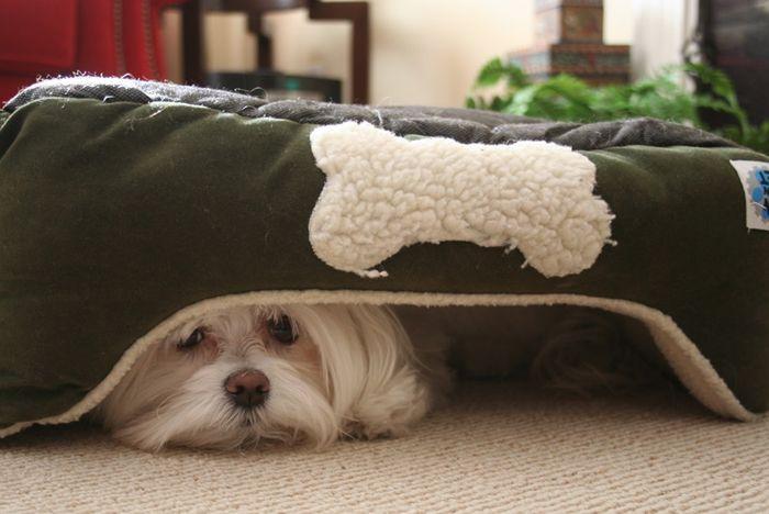 ¿Tiene un perro que se encoge o esconde al oír los ruídos de un trueno?, o viene corriendo a usted para una mayor comodidad cuando los vecinos lanzar fuegos artificiales? El estudio incluyó con un cuestionario completado muchos dueños de perros, y una entrevista estructurada con un conjunto más pequeño …