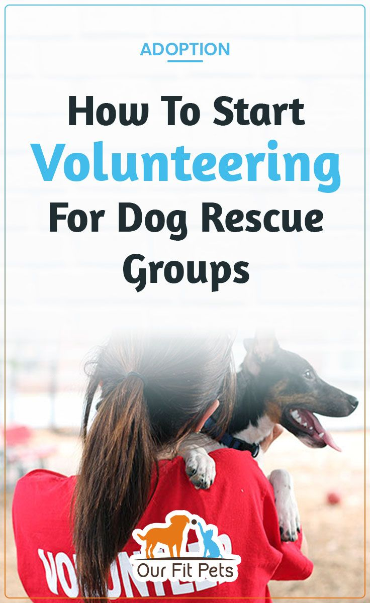 How To Start Volunteering For Dog Rescue Groups Rescue Dogs Dog Rescue Groups Cat Advice
