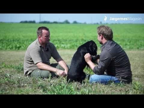 Jægernes Magasin har endnu en gang produceret en flot gratis film til danske jægere, og denne gang handler det om stående jagthunde.