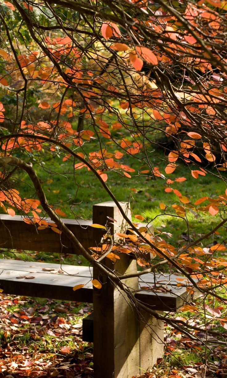Fall & Thanksgiving (Autumn Bench Mobile Wallpaper for 768x1280)