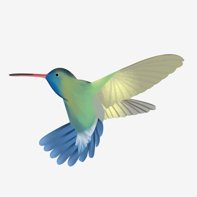 Hummingbird Hummingbird Clipart Color Pattern Hummingbird Hummingbird Vector Png Transparent Clipart Image And Psd File For Free Download Vector Flowers Colorful Backgrounds Color Vector