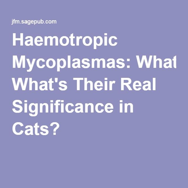 Haemotropic Mycoplasmas: What's Their Real Significance in Cats?