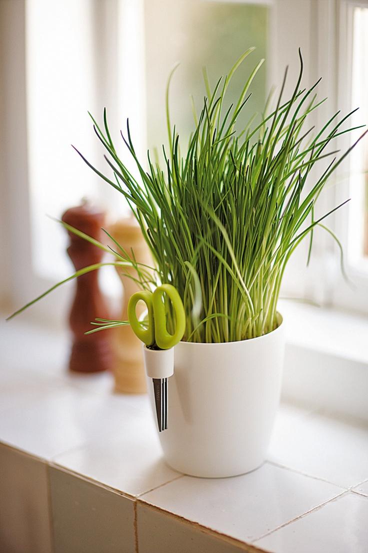 Pot Idéal en cuisine pour vos plantes aromatiques