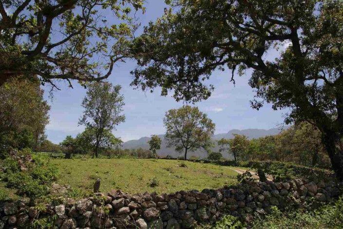 Empfehlung Honduras: Parque Nacional Celaque – Der beeindruckendste Nationalpark & warum sich ein Besuch für dich lohnt!