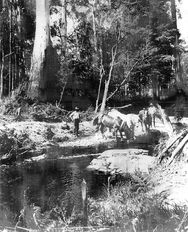 Marysville loggers and their horses taking a breather. So much history to discover. www.marysvilletourism.com/visit-marysville-apps