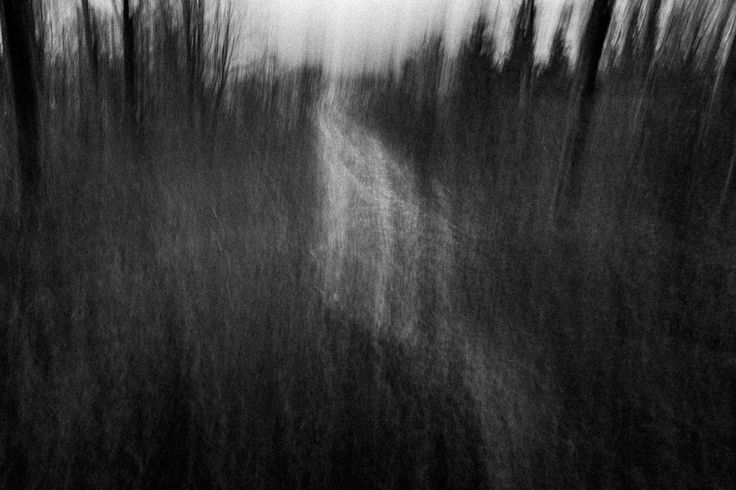"""Dave Thackwell, """"The wilderness - prologue"""""""