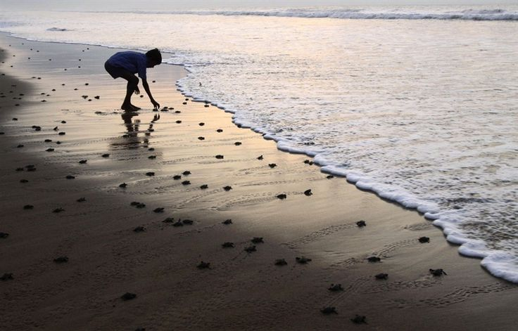 #4 watching baby sea turtles hatch and head for the ocean.