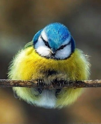 """""""I'm all fluffed up!"""""""