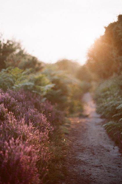 Magical path...
