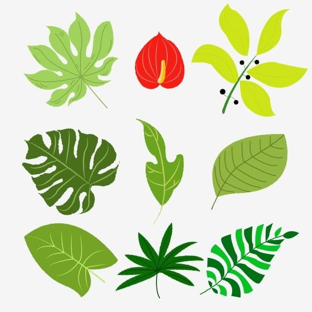 Tropical Leaf Flower Green Red Rainforest Bush Png And Vector With Transparent Background For Free Download Rainforest Flowers Tropical Leaves Flower Illustration