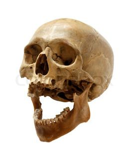 Skull of the person
