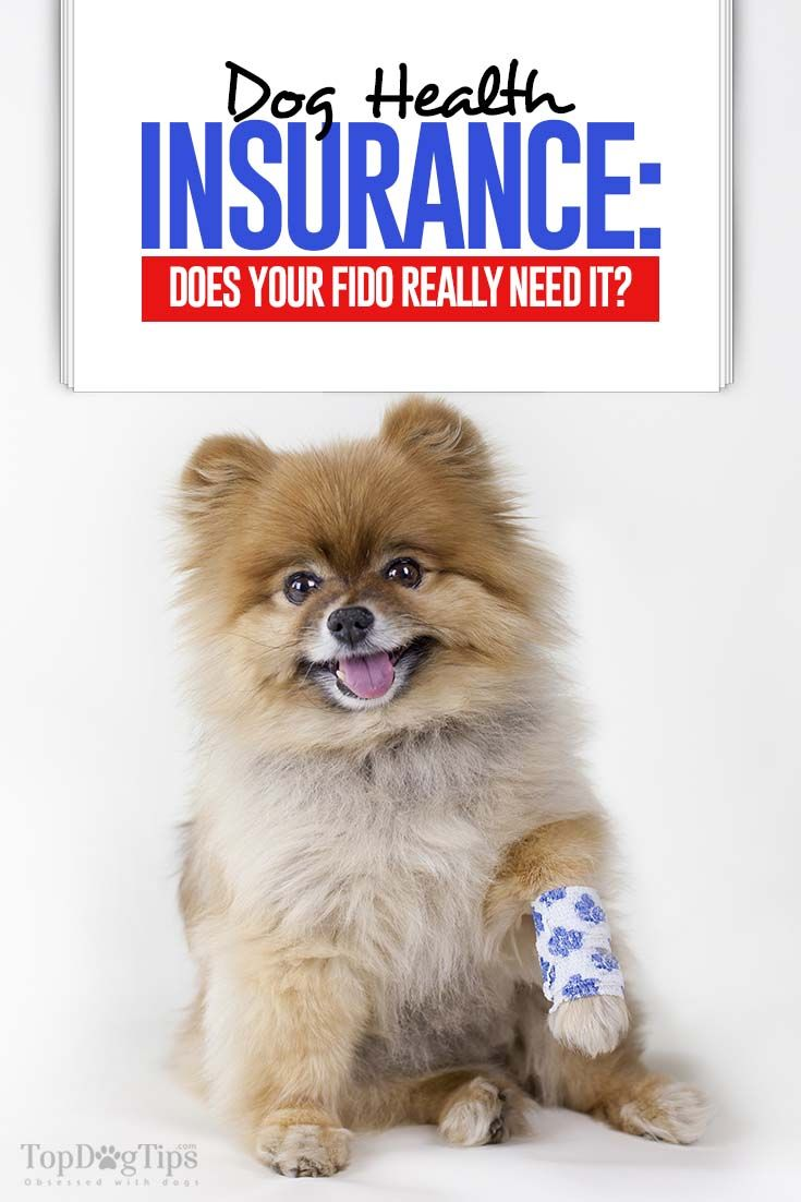 Dog Health Insurance: Does Your Dog Really Need It?